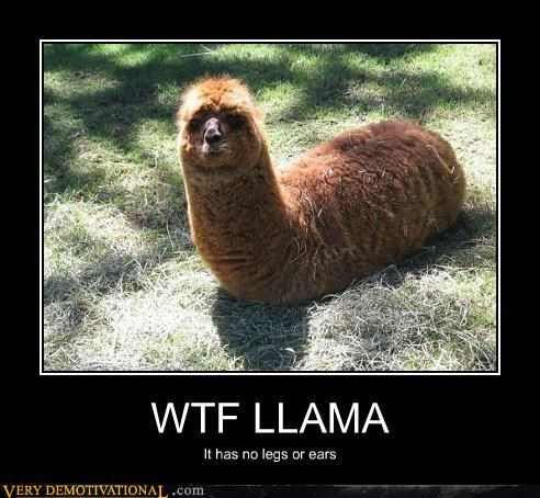 image Pure Awesome Sad wtf llama you-dont-have-any-legs - 3075609344