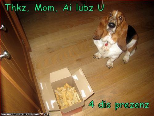 Cheezburger Image 3075939328