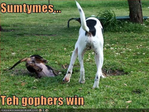 gophers hole whatbreed yard - 3076499200
