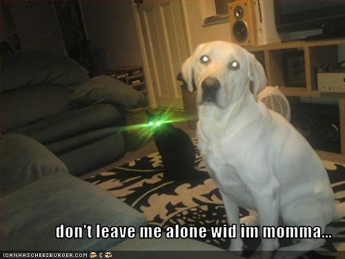 alone golden retriever laser leave lolcats momma scary - 3077526528