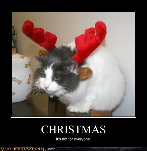 christmas cat antlers - 3077626368