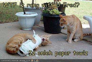 Cheezburger Image 3079841536