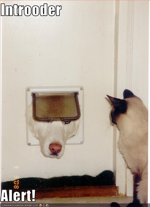 cat door,intruder,loldogs
