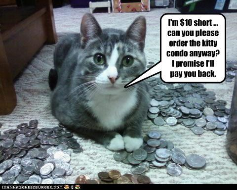 I'm $10 short ... can you please order the kitty condo anyway? I promise I'll pay you back.