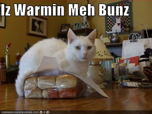 Cheezburger Image 3082215680