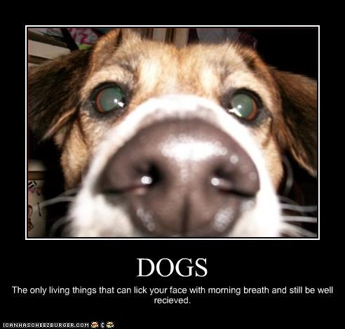 DOGS The only living things that can lick your face with morning breath and still be well recieved.