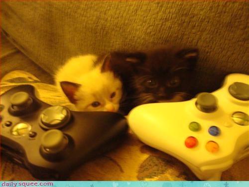 cute gamer kitten - 3082686208