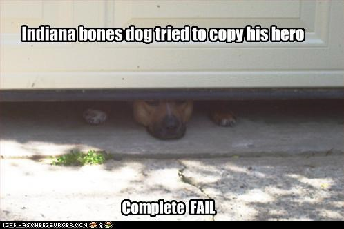 Indiana bones dog tried to copy his hero Complete FAIL