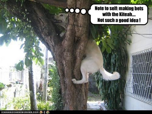betting,golden retriever,kitteh,lolcats,stuck,tree