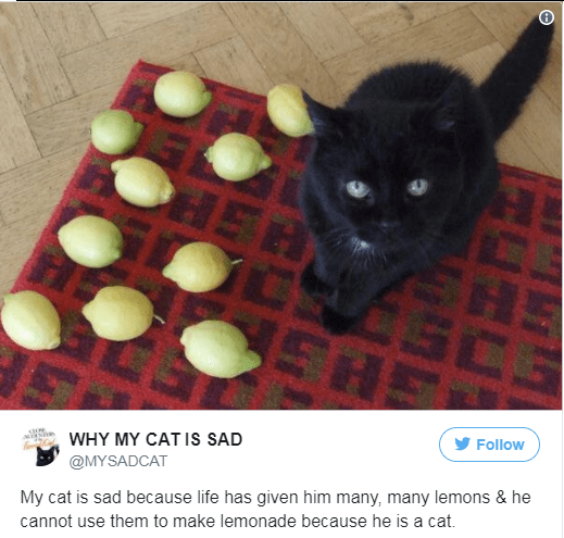 the reasons my cat is sad