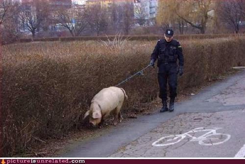 image,jim belushi,k swine,wtf