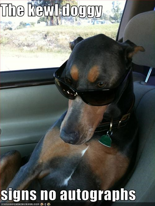 cool doberman pinscher sunglasses