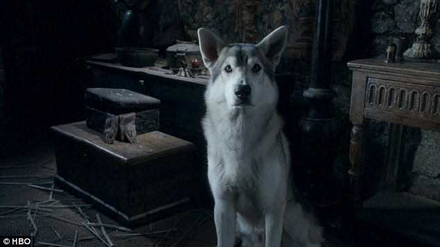 a photo from the game of thrones of the wolve or direwolf - cover for a story on how people should stop buying huskies