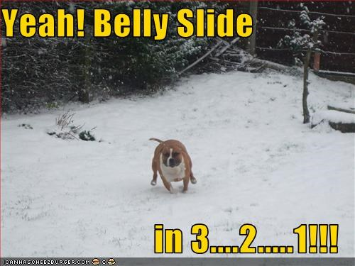 belly,pitbull,playing,slide,snow