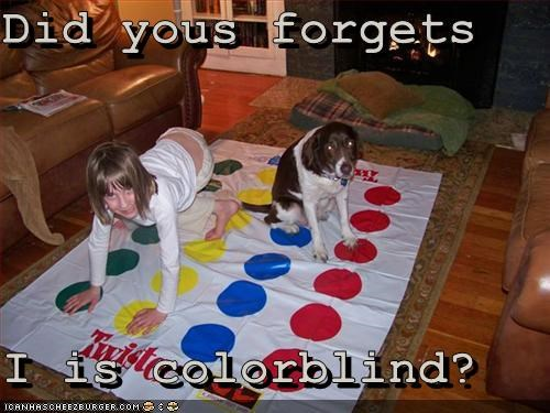 colorblind,games,springer spaniel,twister