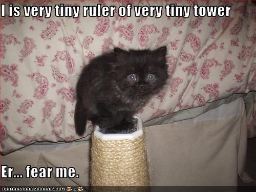 cute,fierce,kitten,LOLs To Go,scratching posts