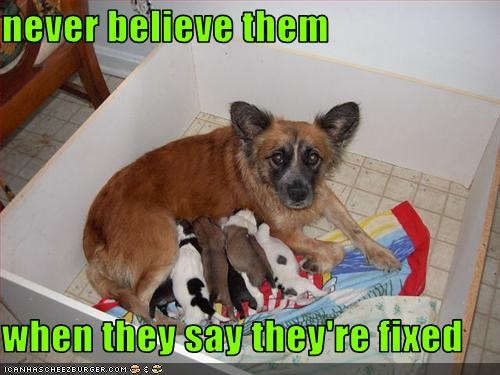 believe fixed litter puppies whatbreed - 3083657728