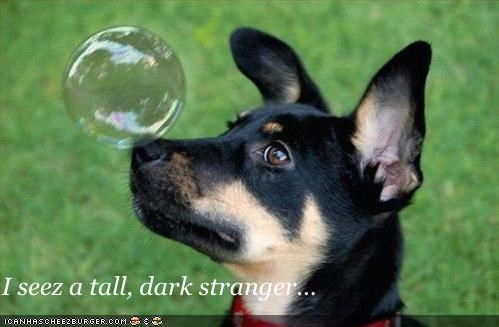 bubbles crystal ball future german shepherd