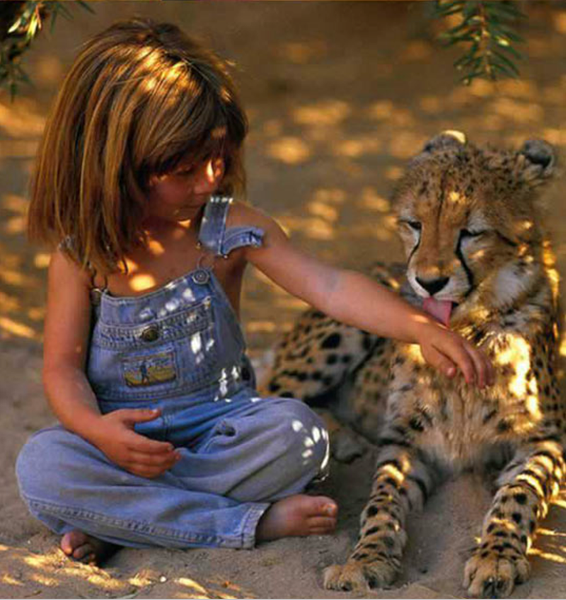a photo of tippi having a cheetah lick her arm - cover for a story about a little girl being the real life mowgli from the jungle book