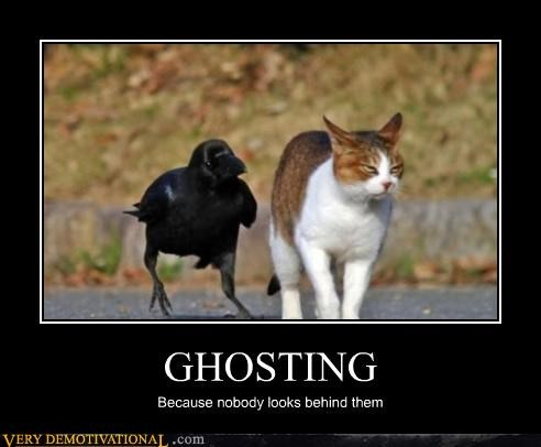 cat ghosting crow