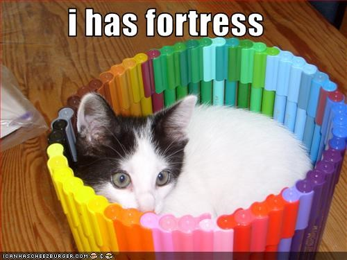 cute,fort,kitten