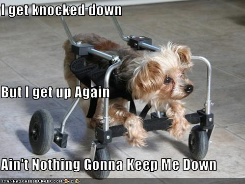 handicapped,inspirational,positive affirmations,silky terrier