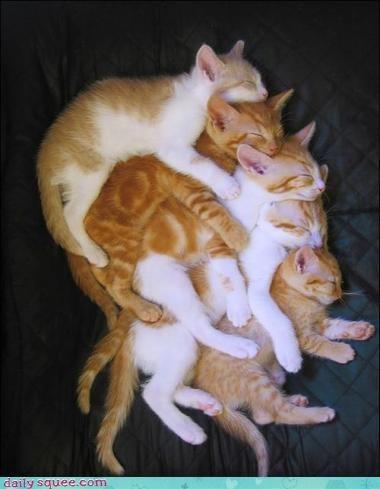 jenga,kitten,pile