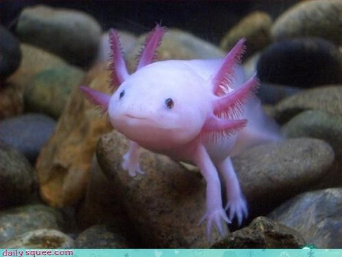 fish mudkip smile