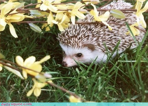 hedgehog nature spring - 3086744064