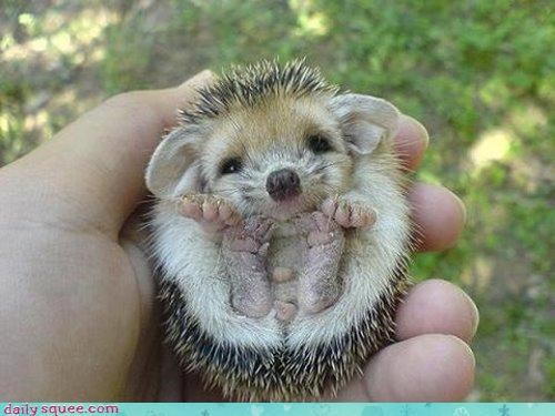cute hedgehog sleaze - 3086752768