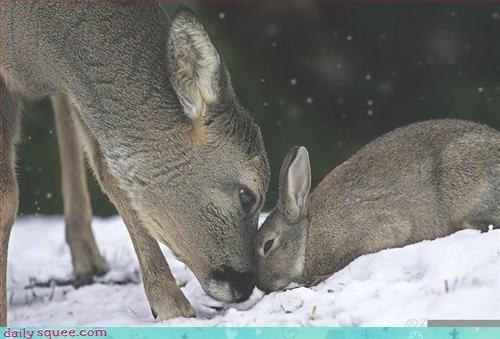 bambi bunny dear