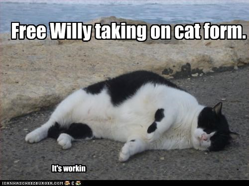 FREE WILLY! Free Willy taking on cat form. (In cat form) It's workin Cleverness Here