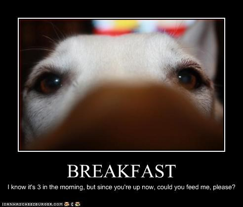 awake breakfast hungry morning whatbreed - 3086866176