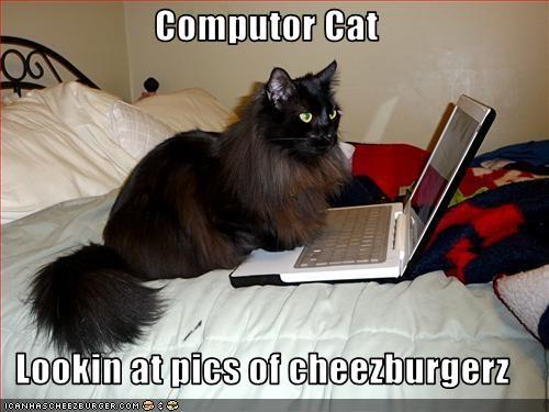 Cheezburger Image 3087665152