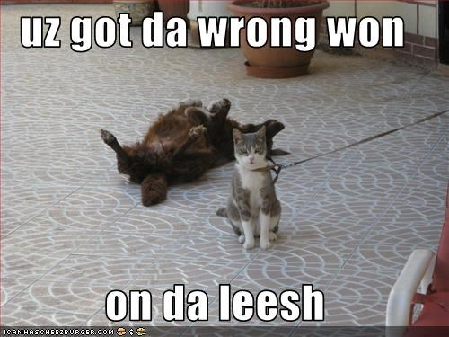 confused,do not want,leash,loldogs