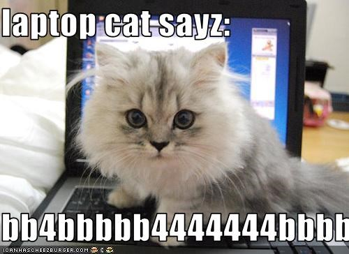 cute kitten laptop typing - 3087874048