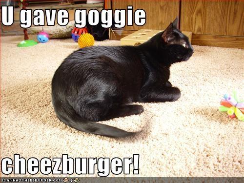 Cheezburger Image 3087942400
