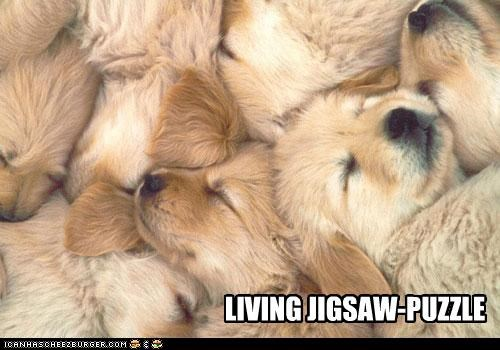 dogpile,golden retriever,puppies