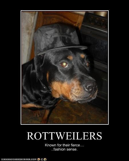 fashion hat rottweiler - 3091497472
