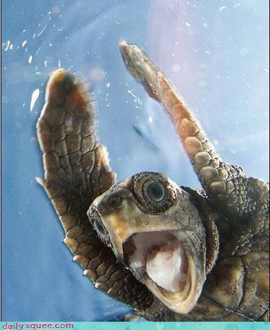 face surprise turtle - 3091770880