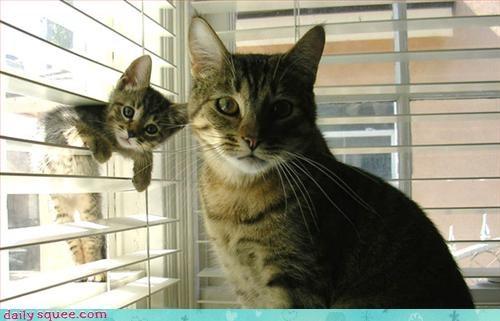 cat kitten mom - 3091841792