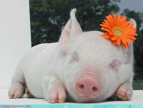 costume dress up pig - 3091859712