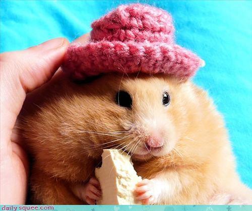 blossom cute hamster - 3091864320