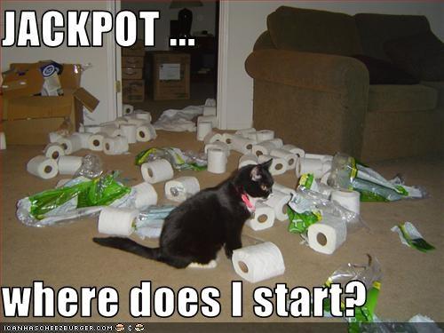 bad cat destruction mess toilet paper - 3092051456
