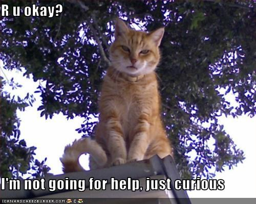 curious,helping,oh noes
