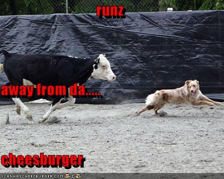 Cheezburger Image 3092403968