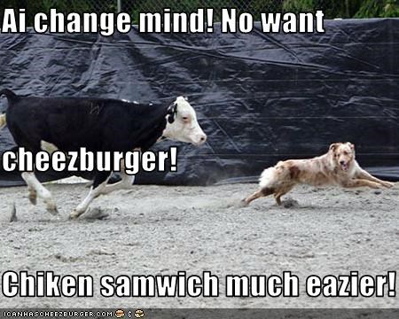 Cheezburger Image 3092755968