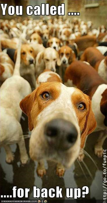 beagle,group