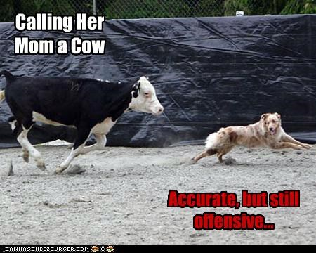 Calling Her Mom a Cow Accurate, but still offensive...
