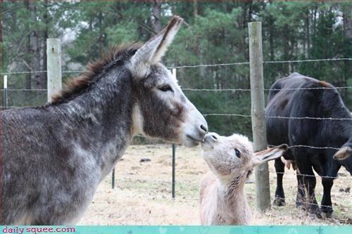 baby cute donkey - 3093619456